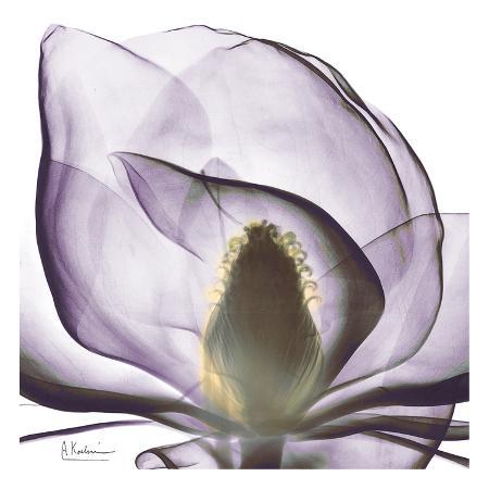 albert-koetsier-precious-orchid-in-purple-close