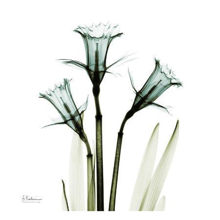 albert-koetsier-three-daffodils-in-green