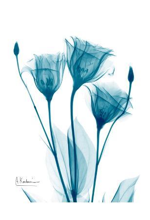 albert-koetsier-three-gentian-in-blue