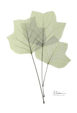albert-koetsier-tulip-tree-in-green