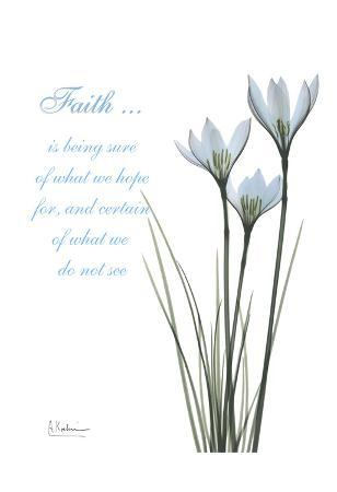 albert-koetsier-white-rain-lily-faith