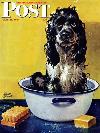 albert-staehle-butch-gets-a-bath-saturday-evening-post-cover-may-11-1946