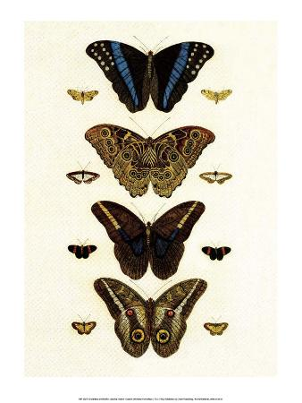 albertus-seba-blue-morphos-butterflies-and-moths
