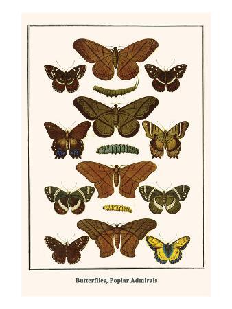 albertus-seba-butterflies-poplar-admirals