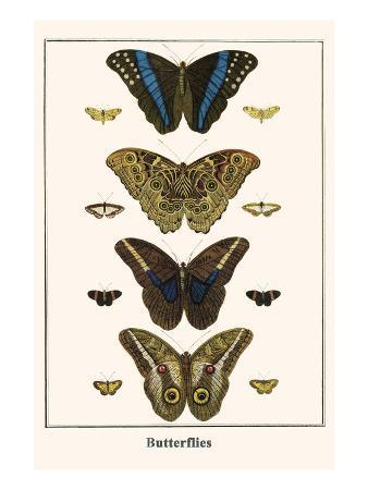 albertus-seba-butterflies