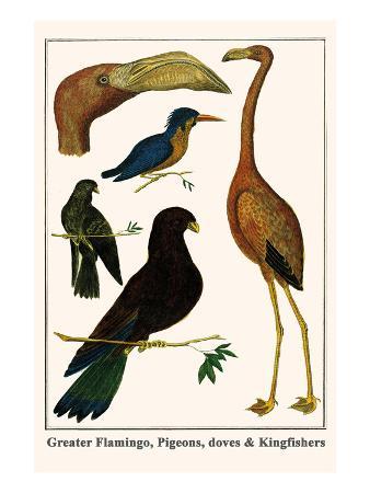 albertus-seba-greater-flamingo-pigeons-doves-and-kingfishers