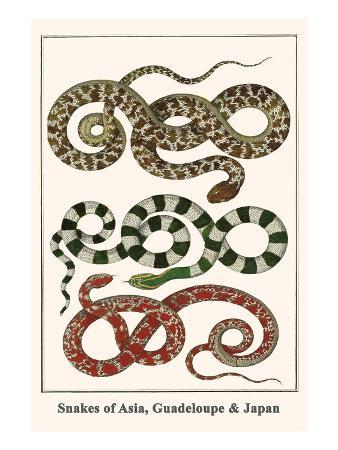 albertus-seba-snakes-of-asia-guadeloupe-and-japan