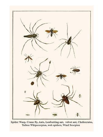 albertus-seba-spider-wasp-crane-fly-ants-leafcutting-ant-velvet-ant-chelicerates-tailess-whipscorpion-etc
