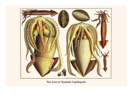 albertus-seba-ten-arm-or-tentacle-cephlopods