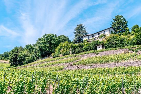 albinhillert-the-unesco-world-heritage-site-of-the-lavaux-vineyards-near-lausanne-in-switzerland