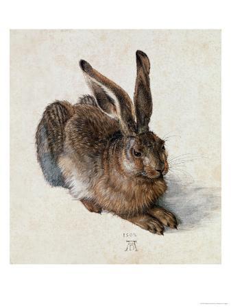 albrecht-duerer-hare-1502