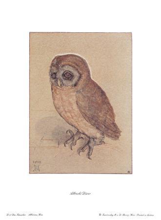 albrecht-duerer-the-owlet