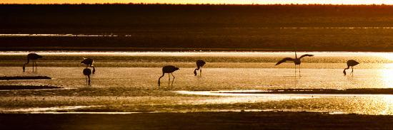 alex-saberi-chilean-flamingos-on-the-laguna-chaxa
