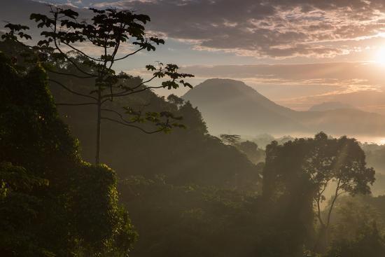 alex-saberi-serra-do-mar-forest-in-sao-paulo-state-in-brazil