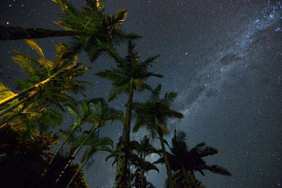 alex-saberi-the-milky-way-above-the-atlantic-rainforest-jungle-and-palm-trees