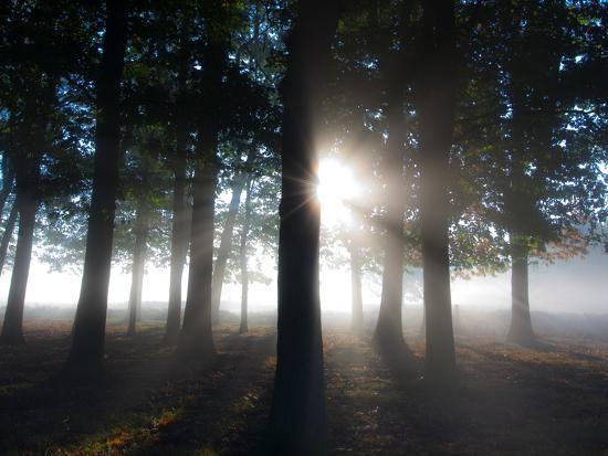 alex-saberi-trees-in-the-autumn-mist-in-richmond-park