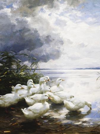alexander-koester-ducks-at-the-lake-s-edge