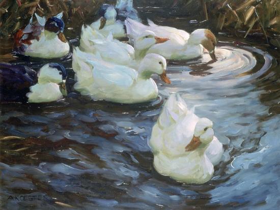 alexander-koester-ducks-on-a-pond-c1884-1932