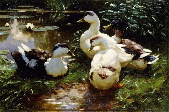 alexander-koester-ducks-on-a-riverbank