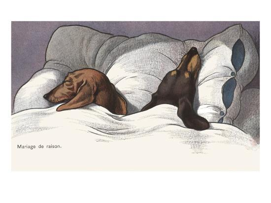 alexandra-day-mariage-de-raison-with-sleeping-dogs-in-bed