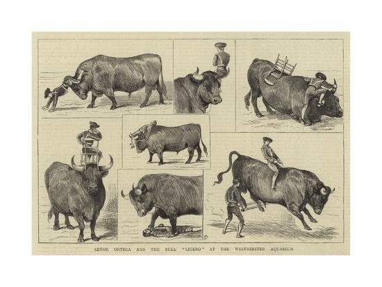alfred-chantrey-corbould-senor-ortega-and-the-bull-ligero-at-the-westminster-aquarium