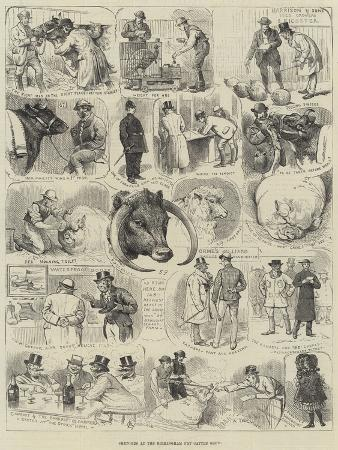 alfred-courbould-sketches-at-the-birmingham-fat-cattle-show