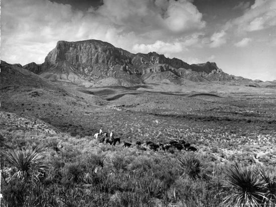 alfred-eisenstaedt-distant-of-cowboys-rounding-up-cattle-with-mountains-in-the-background-big-bend-national-park