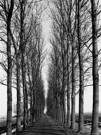 alfred-eisenstaedt-tree-lined-road-near-delft-holland