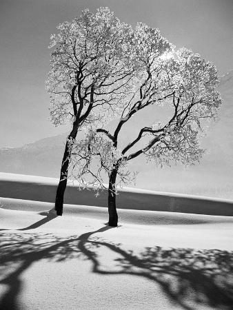 alfred-eisenstaedt-trees-in-the-snow