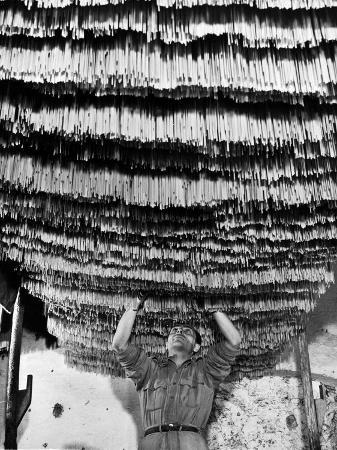 alfred-eisenstaedt-worker-at-pasta-factory-inspecting-spaghetti-in-drying-room