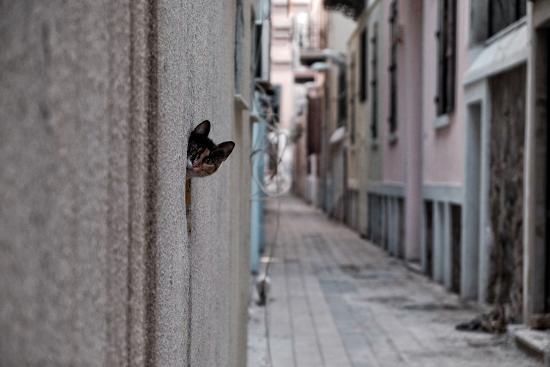 ali-ayer-dantel-street-cat