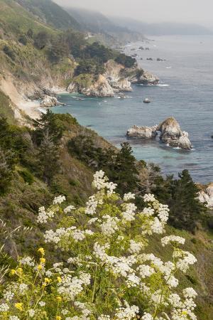 alison-jones-california-big-sur-view-of-pacific-ocean-coastline-with-cow-parsley
