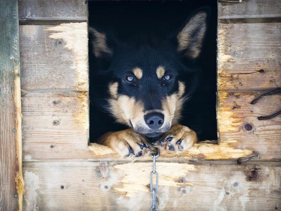 alison-wright-a-sled-dog-in-his-dog-house