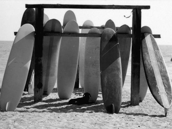allan-grant-dog-seeking-shade-under-rack-of-surfboards-at-san-onofre-state-beach