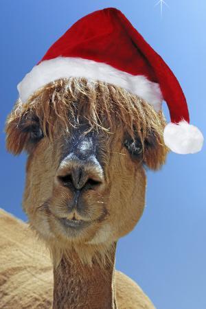 alpaca-wearing-christmas-hat