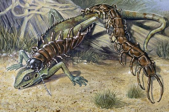 amazonian-giant-centipede-scolopendra-gigantea-scolopendridae