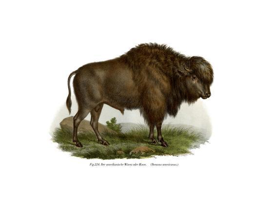 american-bison-1860