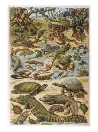 an-amazing-illustration-covering-the-whole-range-of-reptilian-species-from-snakes-to-newts