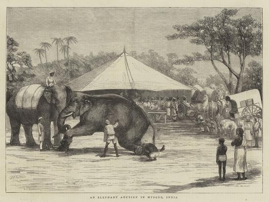 an-elephant-auction-in-mysore-india