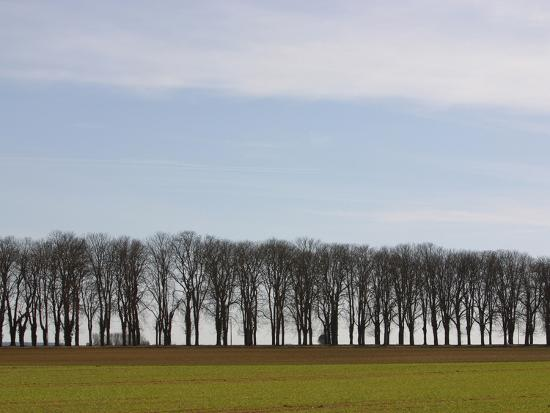 an-expanse-of-blue-sky-above-a-row-of-bare-trees-and-green-grass