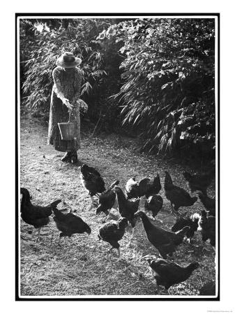 an-older-woman-in-a-long-dress-and-wide-brimmed-hat-throws-handfuls-of-chicken-feed