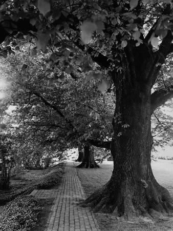 andre-kertesz-house-garden-july-1948