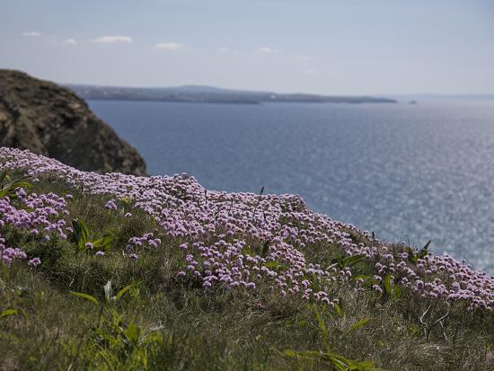 andrea-haase-meadow-wild-flowers-coast-england