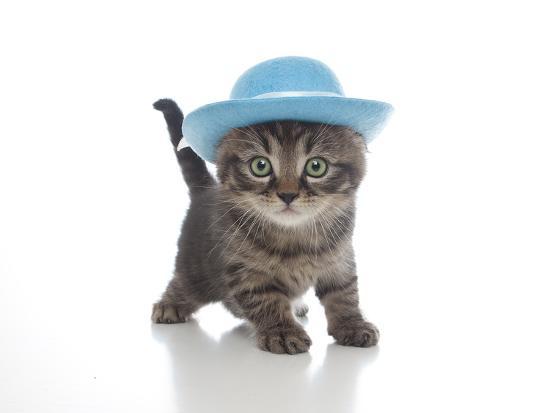 andrea-mascitti-kittens-012