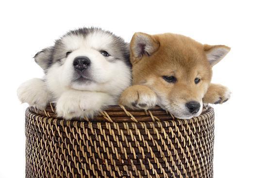 andrea-mascitti-puppies-003