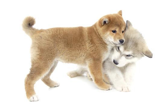 andrea-mascitti-puppies-010