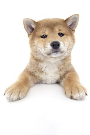 andrea-mascitti-puppies-017