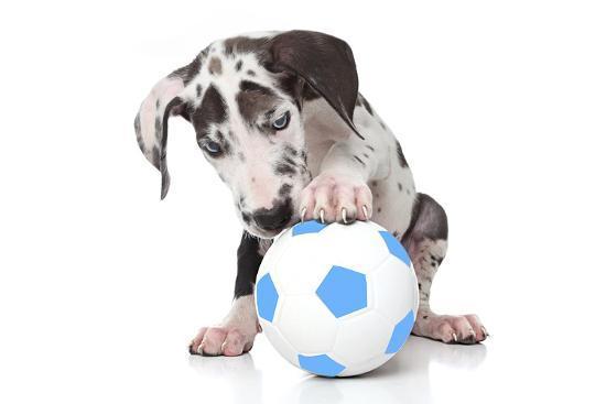 andrea-mascitti-puppies-037