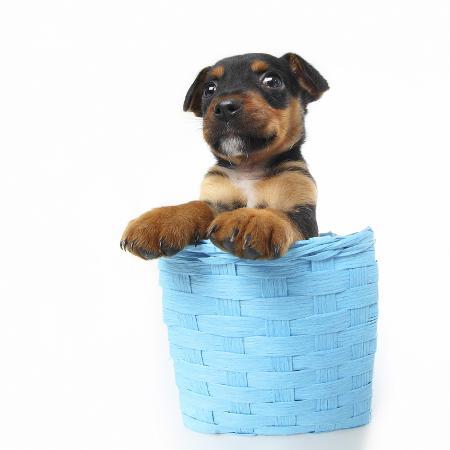 andrea-mascitti-puppies-047