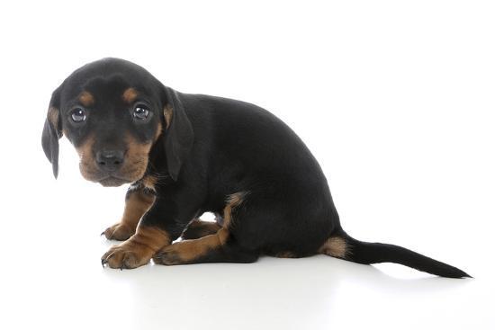 andrea-mascitti-puppies-072